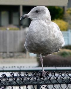 Yogi Bird 2